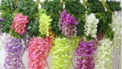 Photo of معلومات عن تخصص نباتات الزينة